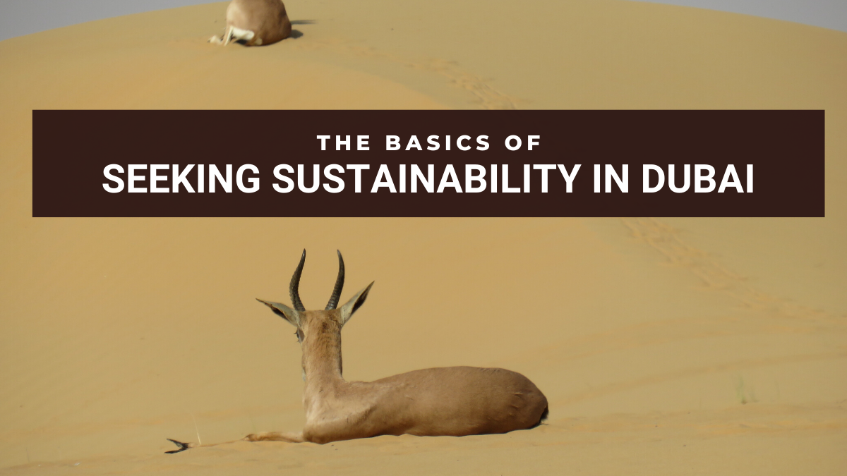 Seeking Sustainability in Dubai