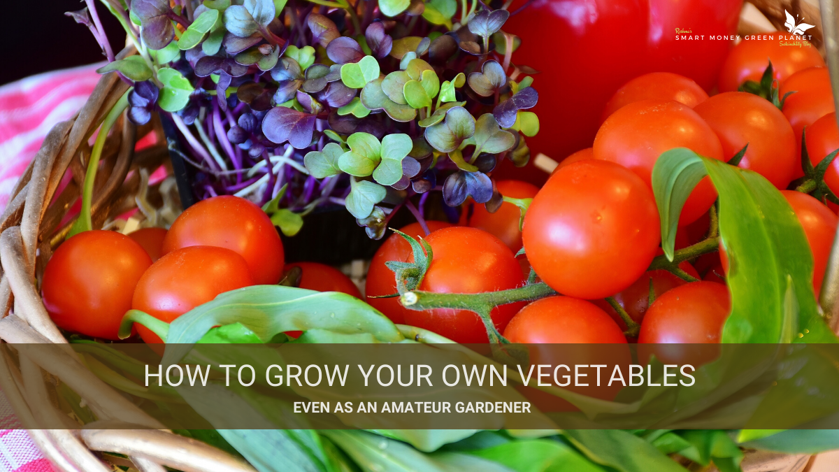 How To Grow Your Own Vegetables