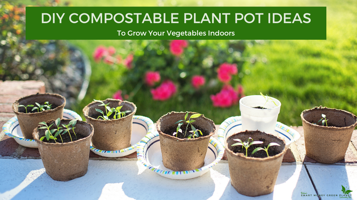 Diy Compostable Plant Pot Ideas To Grow Vegetables Indoors