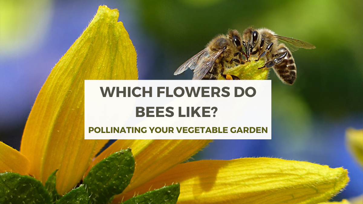 Which Flowers Do Bees Like?