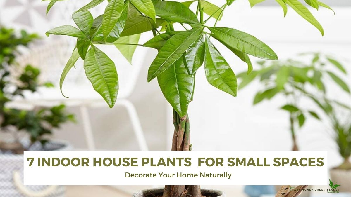 7 Indoor House Plants Perfect for Small Spaces