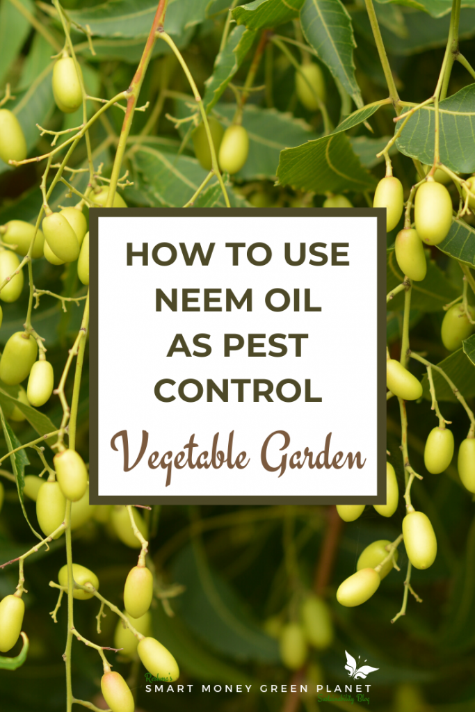 Using Neem Oil for pest control