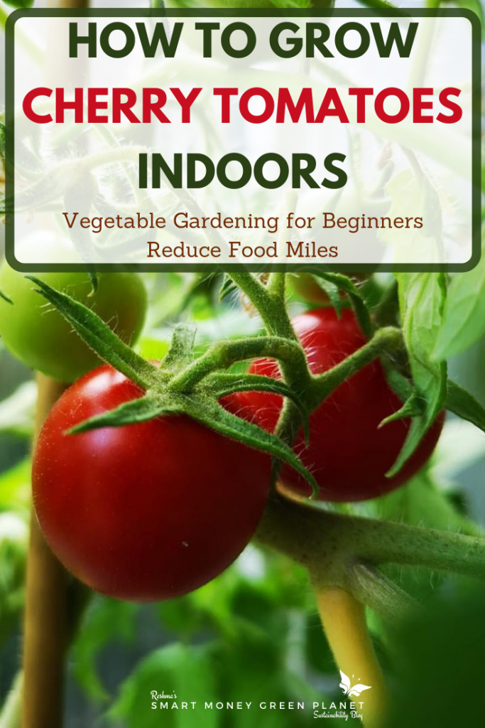How to Grow Cherry Tomatoes Inside